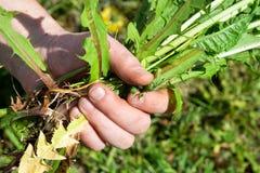 Лето работает в саде Засорители weeding стоковое фото rf
