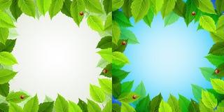 лето рамки Стоковое Фото