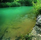 лето реки ландшафта Стоковая Фотография
