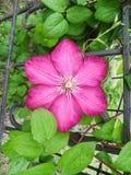 лето сада цветков цветения Стоковое фото RF