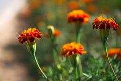 лето сада цветков цветения Стоковые Фото