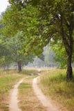 лето сада Стоковые Изображения
