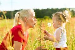 Лето семьи - дуя семена одуванчика Стоковая Фотография RF
