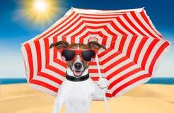 Лето собаки Стоковые Изображения