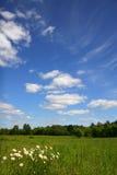 лето солнечное Стоковое Изображение RF