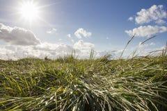 Лето Солнце стоковое фото rf