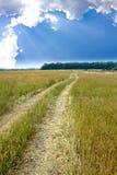 лето степи дороги дня Стоковая Фотография