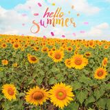 Лето текста здравствуйте! с полем солнцецвета Стоковое Фото