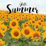 Лето текста здравствуйте! с предпосылкой поля солнцецвета Стоковая Фотография