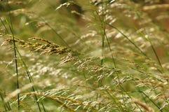лето травы предпосылки стоковые фотографии rf