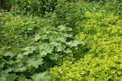 лето травы сада Стоковая Фотография