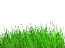 лето травы Стоковые Фотографии RF
