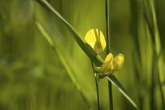 лето травы Стоковое фото RF