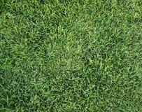 лето травы Стоковые Фото