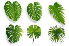Лето, установленные листья весны Зеленый плоский значок Вектор, изолированный дальше Стоковые Изображения RF