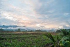лето утра цветастого тумана золотистое светлое Стоковые Фотографии RF