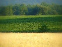 лето хлебоуборки Стоковая Фотография RF