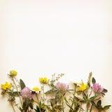 Лето цветет край стоковые изображения