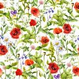 Лето цветет маки, стоцвет, трава луга картина безшовная акварель стоковые изображения rf