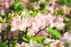 Лето цветет макрос Стоковое фото RF