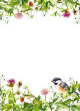 Лето цветет, одичалая трава, травы, птица Флористическая карточка, пустая акварель Стоковое Фото