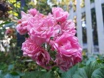 Лето цветка среднее Стоковые Фото