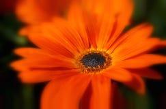 лето цветка Стоковое Изображение