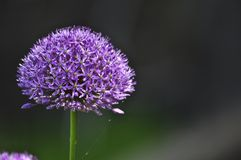лето цветка Стоковые Фотографии RF