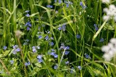 Лето, цветки стоковое изображение rf