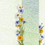 лето цветков предпосылки красивейшее Стоковые Фото