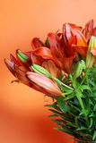 лето цветков lilly померанцовое Стоковое Фото