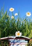лето чтения Стоковое Фото