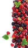 лето ягоды Стоковое фото RF