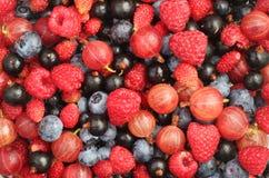 лето ягод предпосылки Стоковые Изображения RF