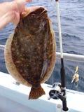 лето flounder задвижки Стоковые Изображения