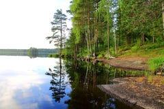 Лето Forrest Стоковое Изображение RF
