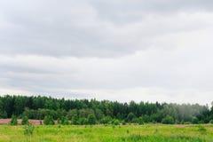 Лето Forrest Стоковая Фотография