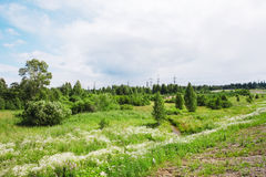 Лето Forrest Стоковые Изображения