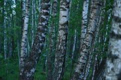 Лето Forrest Стоковое фото RF