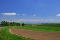 лето furano стоковая фотография rf