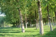 лето hurst Стоковое Фото