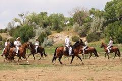 лето las golondrinas демонстрации equine fest Стоковое Изображение