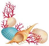 лето seashells знамени Стоковая Фотография RF