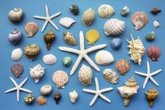 лето seashells песка рамки принципиальной схемы предпосылки Морские звёзды и Seashells стоковая фотография rf