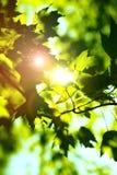 лето shine стоковое фото