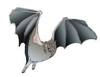 Летучая мышь вампира хлопая его крыла Стоковые Изображения