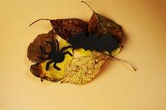 Летучая мышь и паук в листьях осени Украшение для праздновать счастливый хеллоуин Самый лучший праздник в годе приходя вверх стоковые изображения rf
