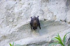 Летучая мышь на стене на день стоковые фотографии rf