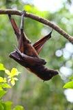 летучая мышь одичалая стоковое фото rf