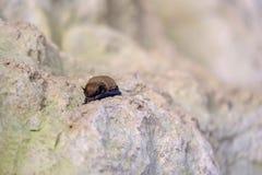 Летучая мышь спать в пещере Стоковые Фотографии RF